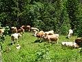 Kranjska gora - panoramio.jpg