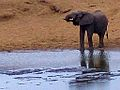 Kruger National Park Elephant.jpg