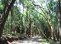 Kuruva Island - Road to Kuruva Island3.jpg