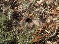 L'araignée dans sa toile by Mikani.JPG