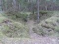 Labanoro sen., Lithuania - panoramio (1).jpg