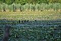 Lago Fimon 7.jpg