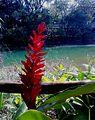 Lagoa do Parque.jpg