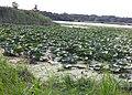 Lake Keller - Maplewood, MN - panoramio (1).jpg