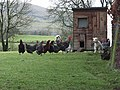 Lamb and chickens, Caldbeck - geograph.org.uk - 349410.jpg