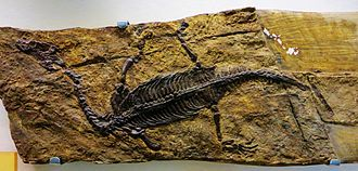 Lariosaurus - Lariosaurus balsami
