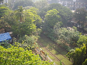 Last farmland within Mumbai city in Prabhadevi