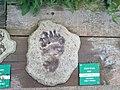 Le centre du parc national de Etsaut à mis en place un parcourt permetant de reconaitre les traces des animaux avec un affichage en braille à Etsaut vue 3.jpg