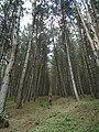 Lejan forest.jpg