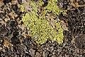 Lichen (16160220734).jpg