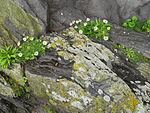 Lichen (8045663862) (2).jpg