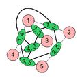 Line graph construction (intermediate).png