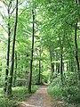 Little Wold Plantation - geograph.org.uk - 813523.jpg