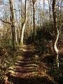 Littlewick Common - geograph.org.uk - 1717955.jpg