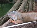 Lizard-02.jpg