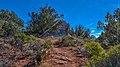 Llama Trail (39316139514).jpg