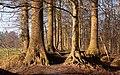 Lochem, tussen de bomen in het Grote Veld IMG 3241 2020-01-01 12.38.jpg