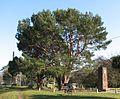 Lone Pine Wattle Park.jpg
