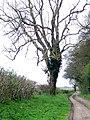 Long Steeple Lane (Track) - geograph.org.uk - 1281299.jpg