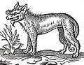 Loup ravissant des Ardennes (1587).jpg