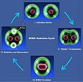 MIMS Radiation Cycle.jpg