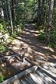 MRNP — Kautz Creek Trail (21866172972) (2).jpg