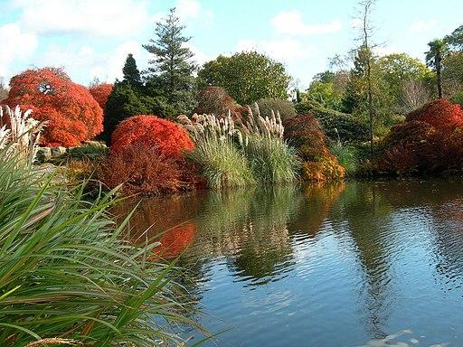 Mansion Pond, Wakehurst Place - geograph.org.uk - 2486601