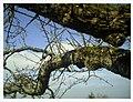 March Denzlingen - Master Season Rhine Valley Photography 2013 - panoramio (6).jpg