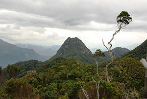 View of a mountain summit with lush vegetation
