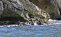 Marseille - île Riou 4.JPG