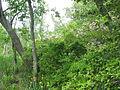 Mason Neck State Park - forest.jpg