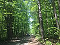 May 2018, Woodland Trails Scout Camp4.jpg