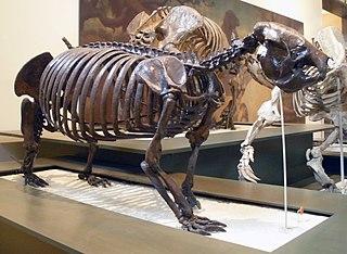 genus of sloths