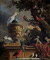 Melchior de Hondecoeter 001.jpg
