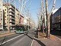Milano - viale Edoardo Jenner - corsia filoviaria.JPG