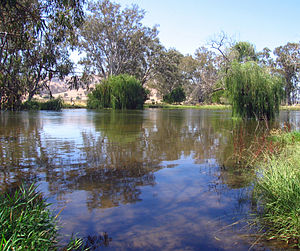 Mitta Mitta in full flow through drought - 6543.jpg
