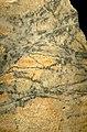 Molybdenum ore (molybdenite-quartz veins in alkaline granite, Oligocene, 24-33 Ma; Climax Mine, Fremont Pass, Colorado, USA) (15024574245).jpg