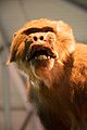 Monkey - Flickr - map.jpg