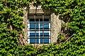 Moosburg Schloss Westwand Weinranken mit Gitterfenster 29082017 5441.jpg