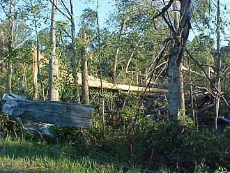 Tropical Storm Bill (2003) - Damaged trees from tornado in Morgan County