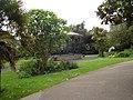 Morrab Gardens Penzance.jpg