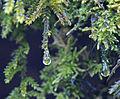 Moss in rain (2382878591).jpg