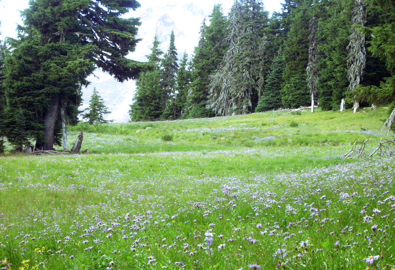 File:Mount Hood timberline alpine meadow in bloom P1709d.png