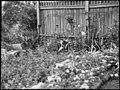 Mrs OE Friend's garden, January 1939, Sam Hood (29745803191).jpg