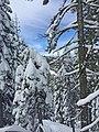 Mt. Ashland in Winter, Rogue River Siskiyou National Forest (24628003654).jpg