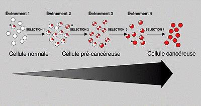 Caractere multi etapes de la cancerogenese oncoblog - Tuer un arbre avec de l acide ...