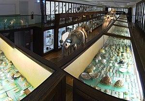 Natural History Museum of Nantes - Image: Muséum Histoire Naturelle Nantes 20090926