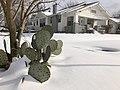 Muskogee snowstorm 2021-02-15 222 N 10th St cactus NW.jpg