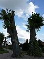 ND B.9.6 Lindenallee Preußisch Oldendorf 12.jpg