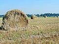 Na de oogst - panoramio.jpg